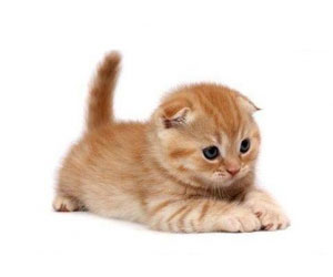 Что значит, если приснилась кошка во сне