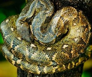 Что значит видеть много змей во сне